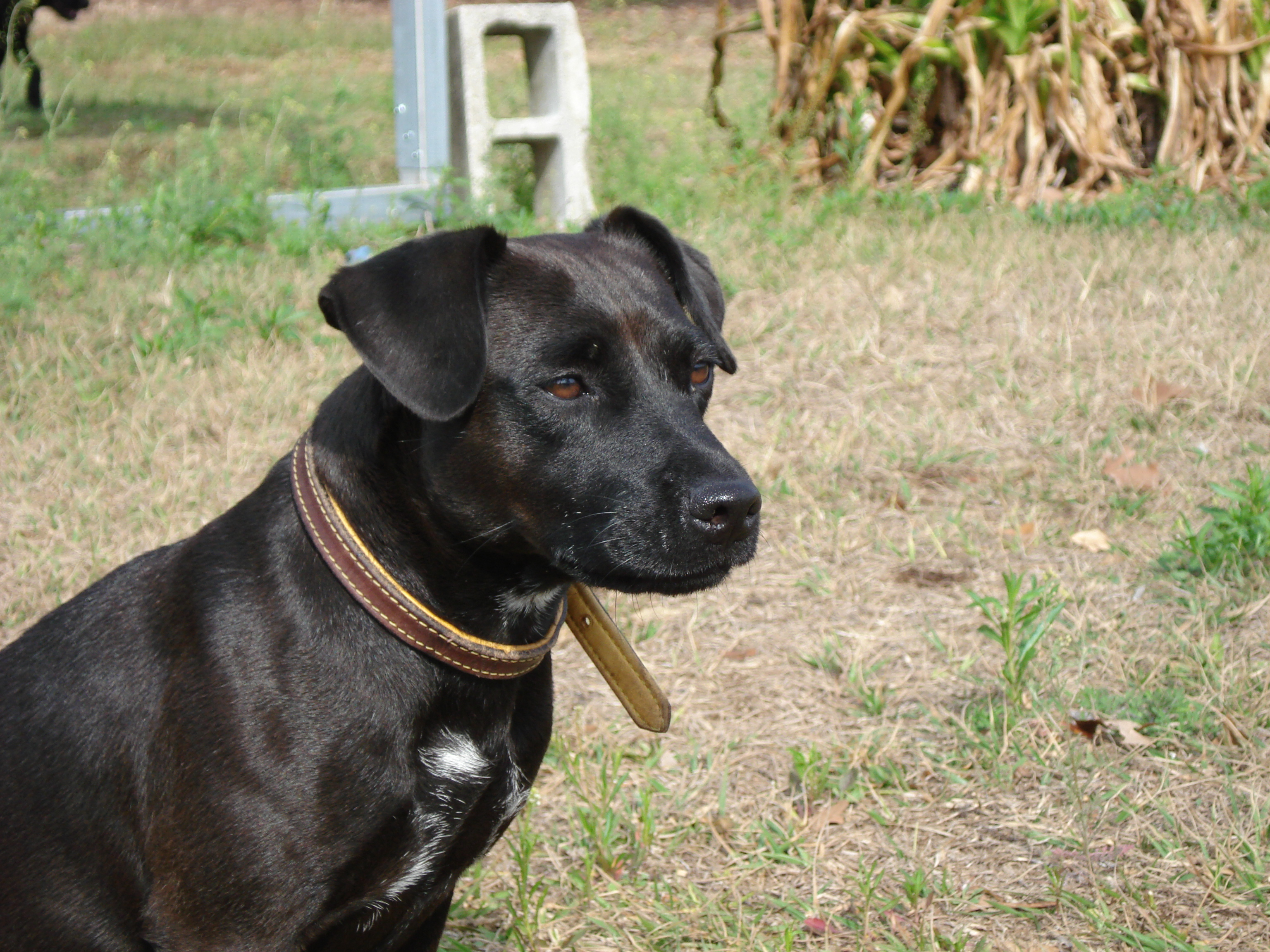Image Result For Patterdale Terrier